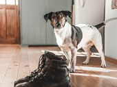 Dog and leather boots on wooden floor. Vintage home interior.. poster