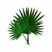 Palm Leaves Illustration. Green, Leaf, Natural. Nature, Flora, Summer. Nature Plants Concept. Vector poster