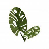 Tropical Monstera Illustration. Nature, Flora, Summer. Nature Plants Concept. Vector Illustration Ca poster
