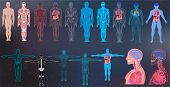 X-ray Body Collections In Futuristic Hud Sci Style. Modern Scan Of Internal Ograns And Human Body. H poster