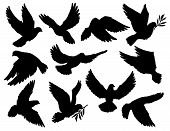 Dove Silhouettes With Olive Branch, Peace Symbol. Vector Pigeon With Spread Wings Flying With Laurel poster