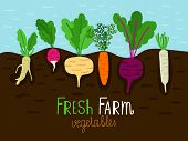 Vegetables Garden Growing. Vegetable Gardening Sketch, Family Farm Food Grow With Roots In Ground, V poster
