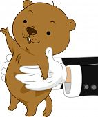 image of groundhog  - Illustration of Someone carrying a Groundhog - JPG
