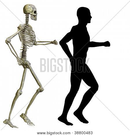 High resolution conceptual 3D human ideal for anatomy,medicine and health designs, isolated on white background. It is a man made of a skeleton and a transparent body as in a x-ray