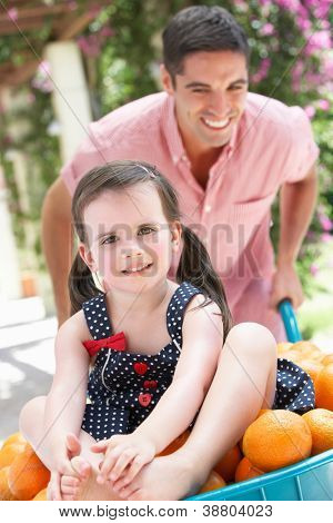 Father Pushing Daughter In Wheelbarrow Filled With Oranges