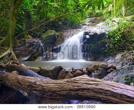 Creek in tropical forest. Beautiful landscape with trees, mossy stones and green plants. Adventure background.