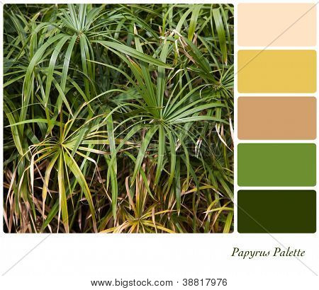 Papyrus plant background with complimentary colour swatches. Papyrus was used by the ancient Egyptians as a raw material to make paper.
