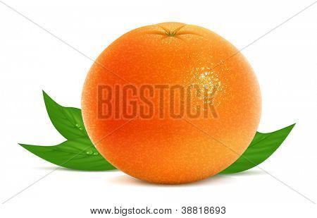 Vector illustration of fresh grapefruit