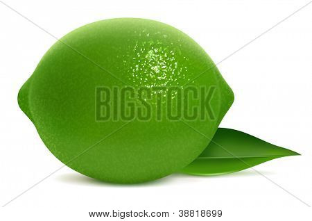 Vector illustration of fresh lime with leaf