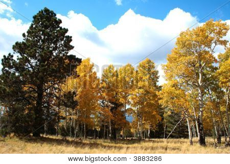 Fall Color Arizona
