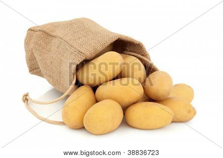 New potato vegetables in a hessian drawstring sack and loose over white background, charlotte variety.