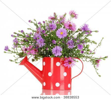 beautiful bouquet of purple flowers in watering can isolated on white