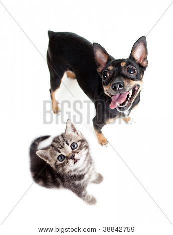 dog and kitten top view isolated on white