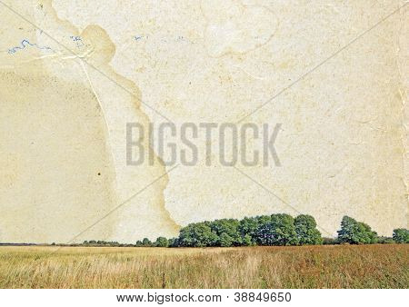 oak copse on grunge background