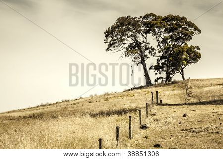An image of some trees on a hill