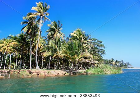 Green palm forest, beautiful  landscape in Baracoa, Cuba