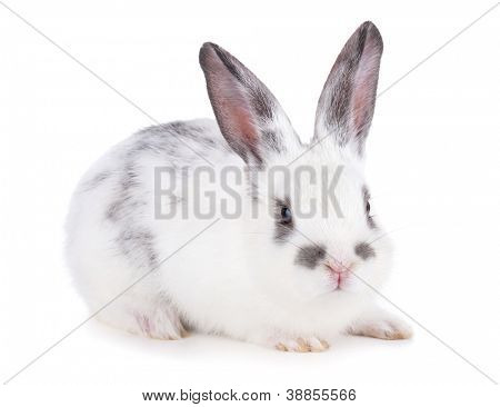 Small rabbit. Isolated on white background