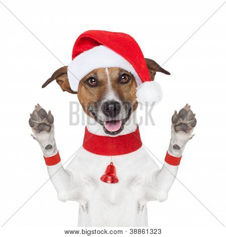 Hello Goodbye Christmas  Dog