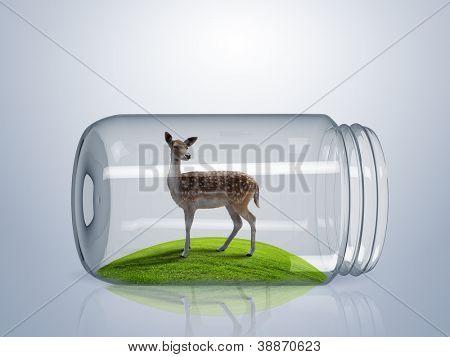 Young wild deer inside a glass jar