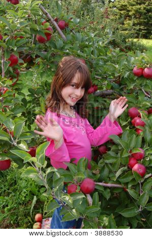 Apple Orchard 043