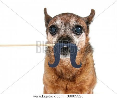 a dog with a mustache on a stick