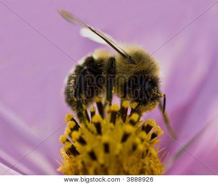 Joy Of Pollen