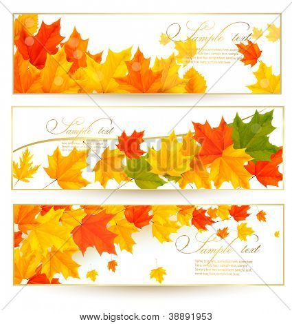 Three autumn banners with color leaves in golden frames. Vector