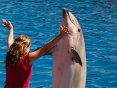 Playing With Dolphin