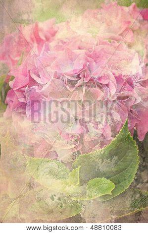 Beautiful Hydrangea Flower Background
