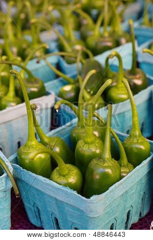 Rows of green Jalape�?�?�?�±os standing in individual boxes at the farmers market