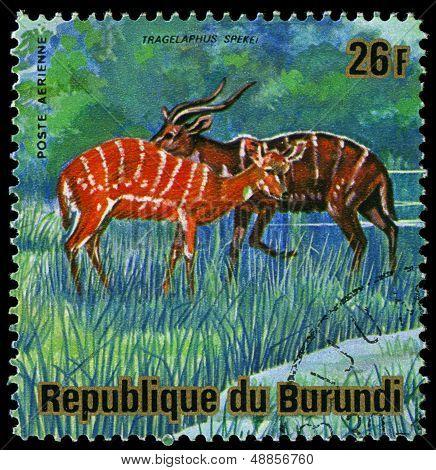 Burundi - Circa 1975: A Stamp Printed In Burundi, Shows Sitatunga (tragelaphus Spekii), Circa 1975