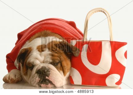 Bulldog With Red Purse