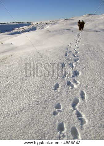 Footpaths In The Snow