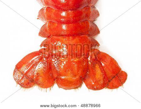 Crawfish tail close-up. isolated on white background