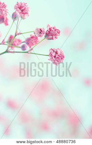 Baby's Breath Flowers On Textured Background