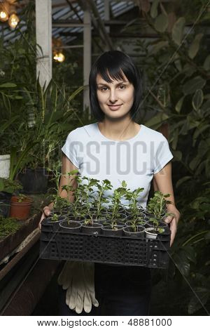 Portrait of young female botanist carrying potted plants in crate at greenhouse