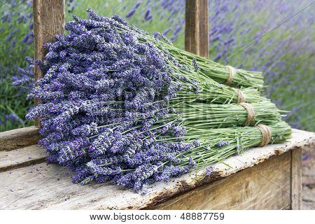 Pile Of Lavender Flower Bouquets