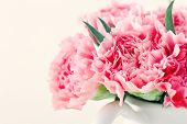 image of carnations  - Closeup of pink carnations on light shabby chic background - JPG