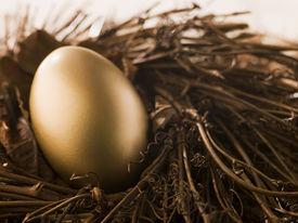pic of nest-egg  - Golden Nest Egg - JPG