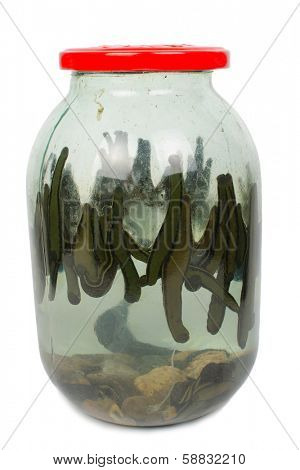 Leech in a glass jar