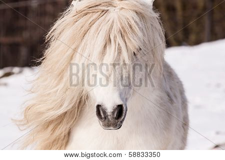 White Sexy Pony