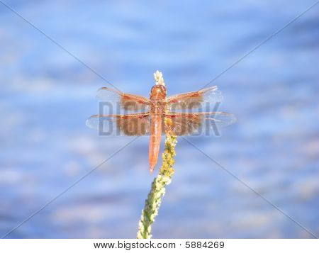 Perch of the Dragonfly