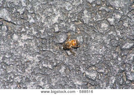 Gravel Bee