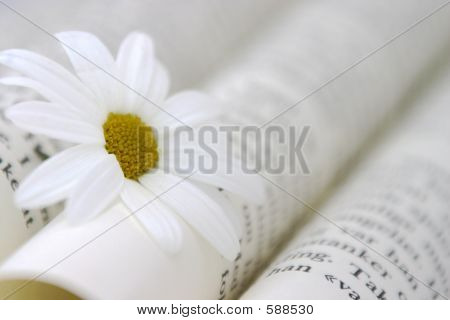 Book And Daisy