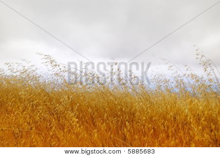 Dry Grass With Cloudy Sky