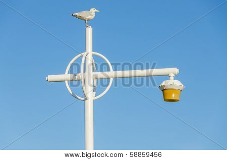 Rockaway, Queens, NYC, USA: seagull on lampost