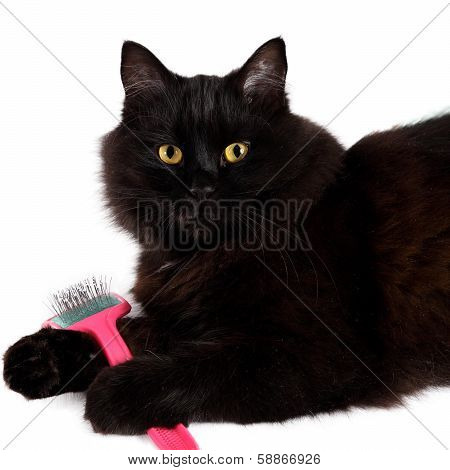 Black Cat With A Brush In His Paws