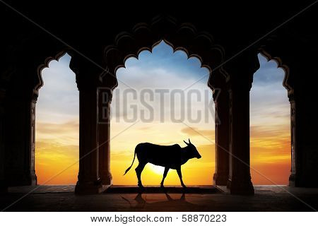 Indian Cow Silhouette