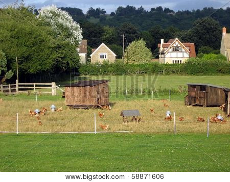 Chicken coops in farm in countryside
