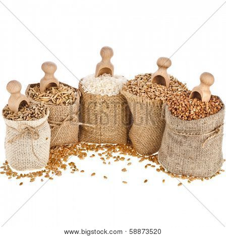 Corn kernel seed meal and grains in sackcloth bags with wooden scoop isolated on a white background